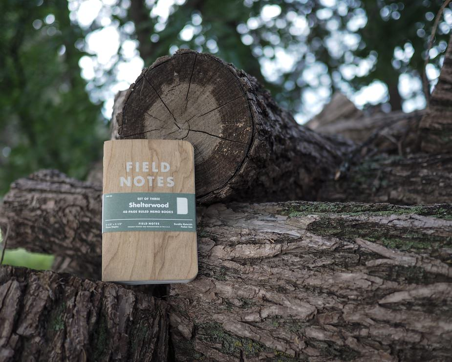 Field Notes: Shelterwood